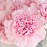 Sanovnik cveće – Šta znači sanjati cveće?