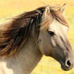 Sanovnik konj – Šta znači sanjati konja?