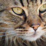 Sanovnik mačka – Šta znači sanjati mačku?