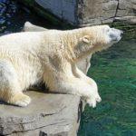 Sanovnik medved – Šta znači sanjati medveda?