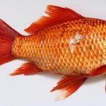 Sanovnik riba – Šta znači sanjati ribu?