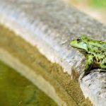 Sanovnik žaba – Šta znači sanjati žabu?