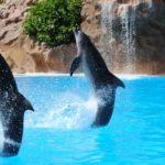 Sanovnik delfin – Šta znači sanjati delfina?