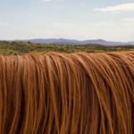 Sanovnik dlake – Šta znači sanjati dlake?
