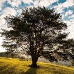 Sanovnik drvo – Šta znači sanjati drvo?