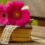 Sanovnik knjiga – Šta znači sanjati knjigu?