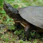 Sanovnik kornjača – Šta znači sanjati kornjaču?