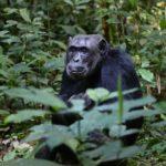 Sanovnik majmun – Šta znači sanjati majmuna?