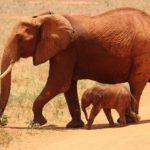 Sanovnik slon – Šta znači sanjati slona?