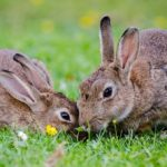 Sanovnik zec – Šta znači sanjati zeca?