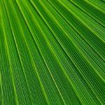 Sanovnik zelena boja – Šta znači sanjati zelenu boju?