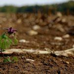 Sanovnik zemlja – Šta znači sanjati zemlju?