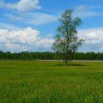 Sanovnik livada – Šta znači sanjati livadu?