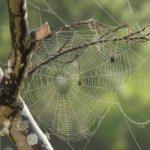 Sanovnik paučina – Šta znači sanjati paučinu?