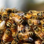 Sanovnik pčele – Šta znači sanjati pčele?